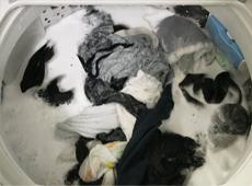 検証結果:合成洗剤の場合(すすぎ1回のみ)